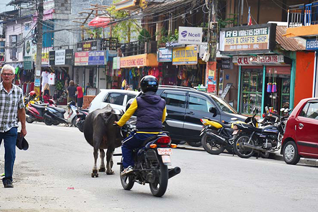 What Do People Say About Nepal Traffic