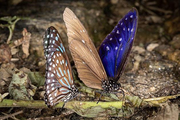 Annapurna Butterfly Museum pokhara best destinations