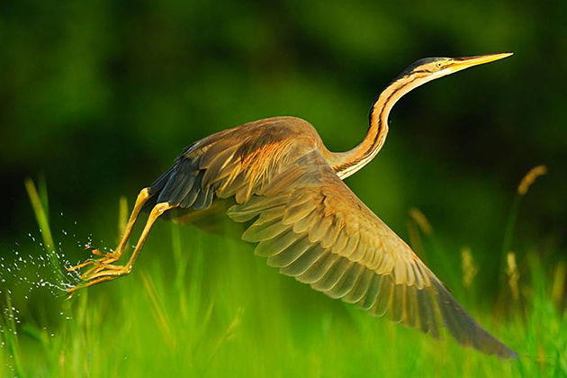 Birds - chitwan national park experience