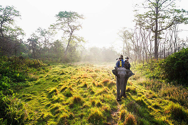 Chitwan National Park | Wildlife Experience in Nepal
