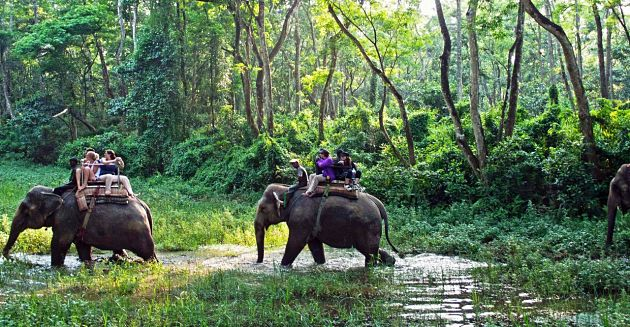 elephant safari - nepal tour itinerary packages