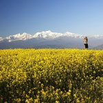 Flower field - Nepal Sightseeing Tour - 6 Days