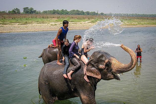 asian elephant - chitwan national park wildlife experience
