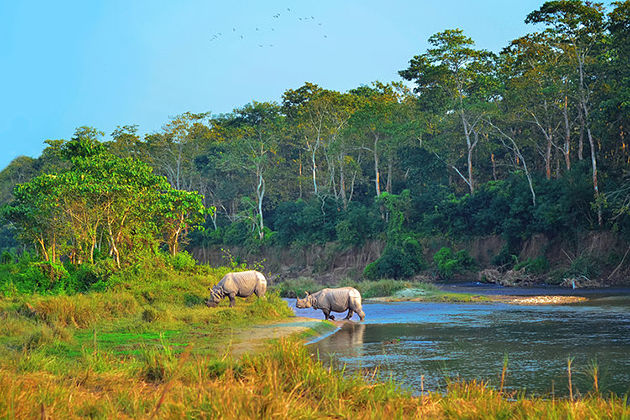 chitwan national park - natural heritages of nepal