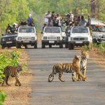 Chitwan national park - nepal tour itineraries