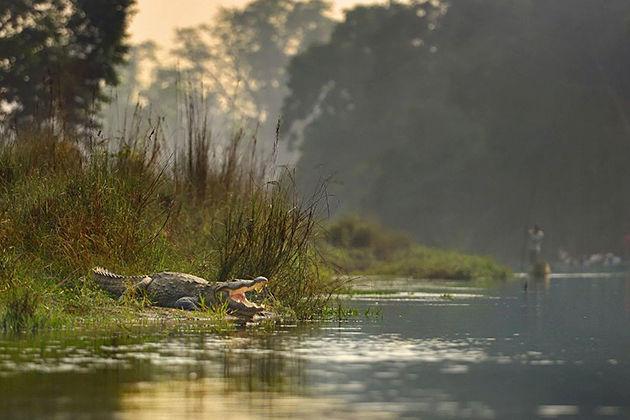 Crocodile - chitwant national park