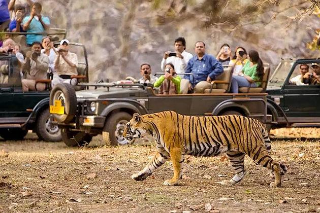 jungle safari - chitwan national park activities