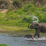bardia national park tour - Jungle Safari in Nepal