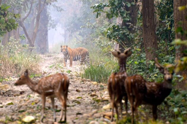 Bardia National Park - safari in nepal