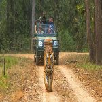 Bardia National Park - nepal jungle safari tours