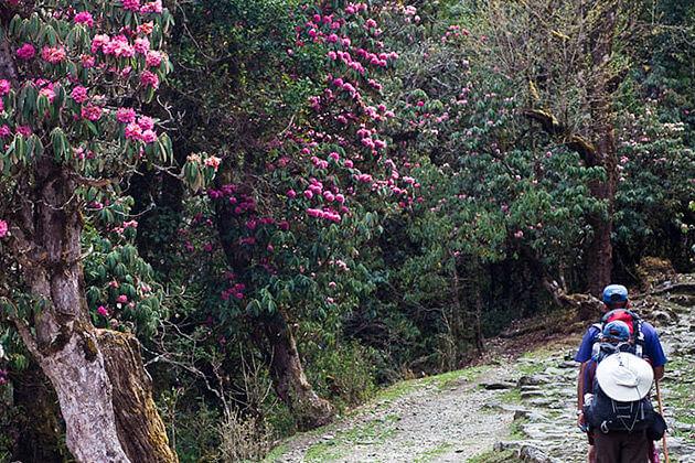 spring - good season for trekking nepal