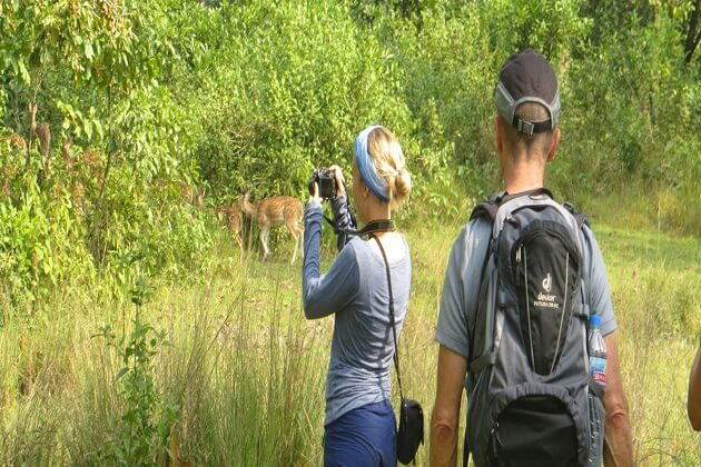 Jungle Safari nepal - places to visit in nepal